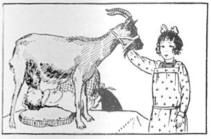 nourrisson allaité par une chèvre, larousse ménager de 1926